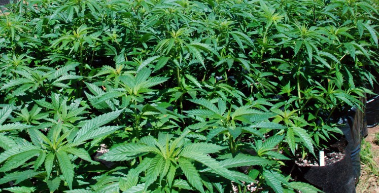a discussion on marijuana prohibition The association was worried that prohibition of marijuana would deprive the public of the benefits of a drug that on further research may  much of the discussion around marijuana legalization.